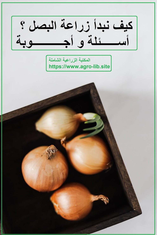 كيف نبدأ زراعة البصل ؟ : أسئلة و اجوبة