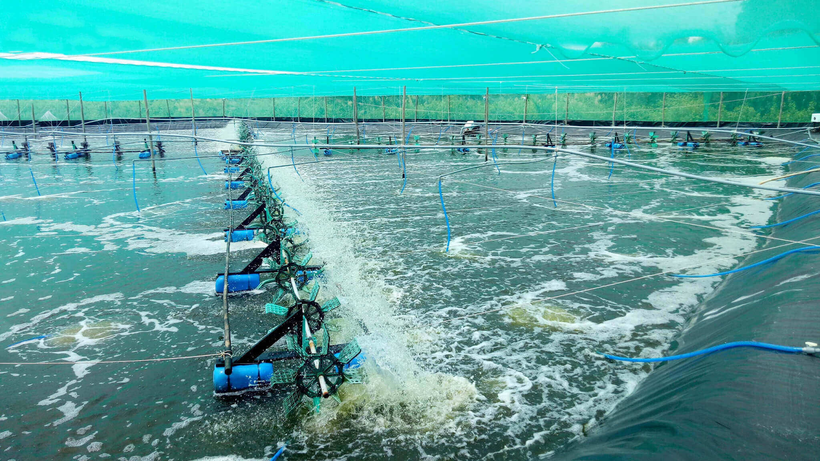 Heavy use of prophylactic antibiotics in aquaculture: a growing problem for human and animal health and for the environment.