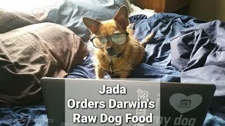 Mini Review: Ordering Darwin's Raw Dog Food