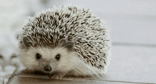 hewan peliharaan lucu dan murah