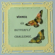 Winner Butterlfy Challenge