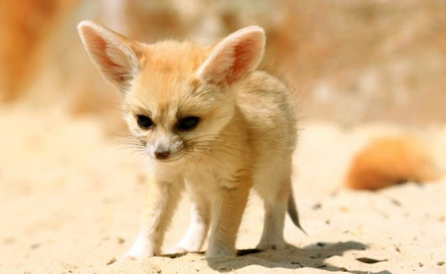 10 Cutest Animals in the World That You Have to See