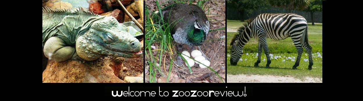 ZooZooReview: Best 100 Animals We Have Seen In Zoos (70-61)
