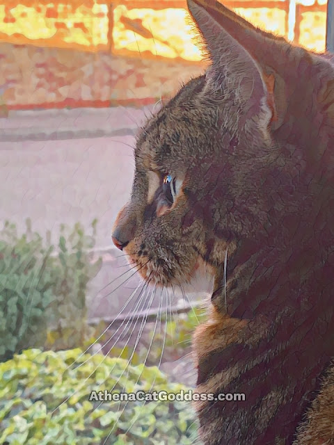 tabby cat at the window
