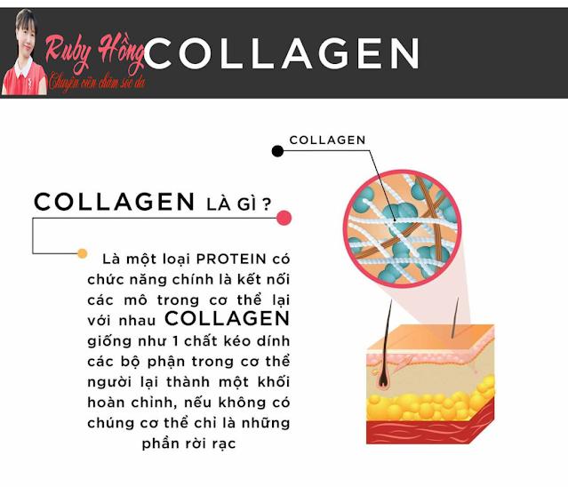 Elastin - Collagen và vitamin C với công dụng cho làn da phái đẹp