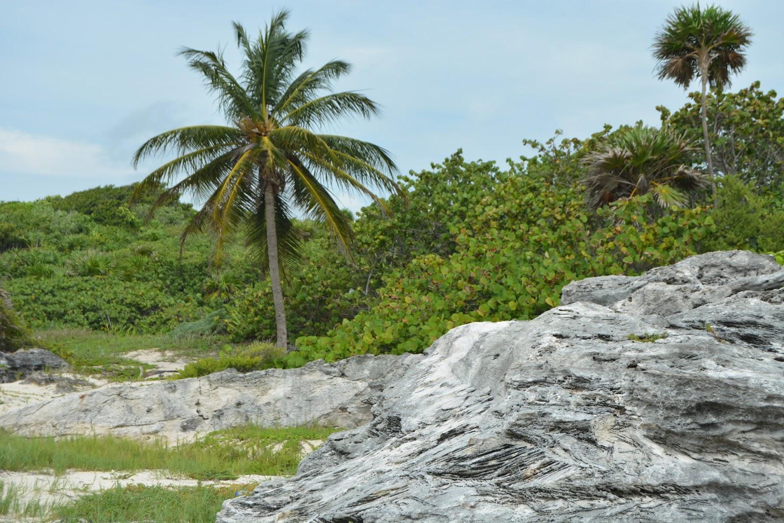 mexico, playacar, playa del carmen, travel, holiday, beaches, beach, Caribbean, palm trees, traveling
