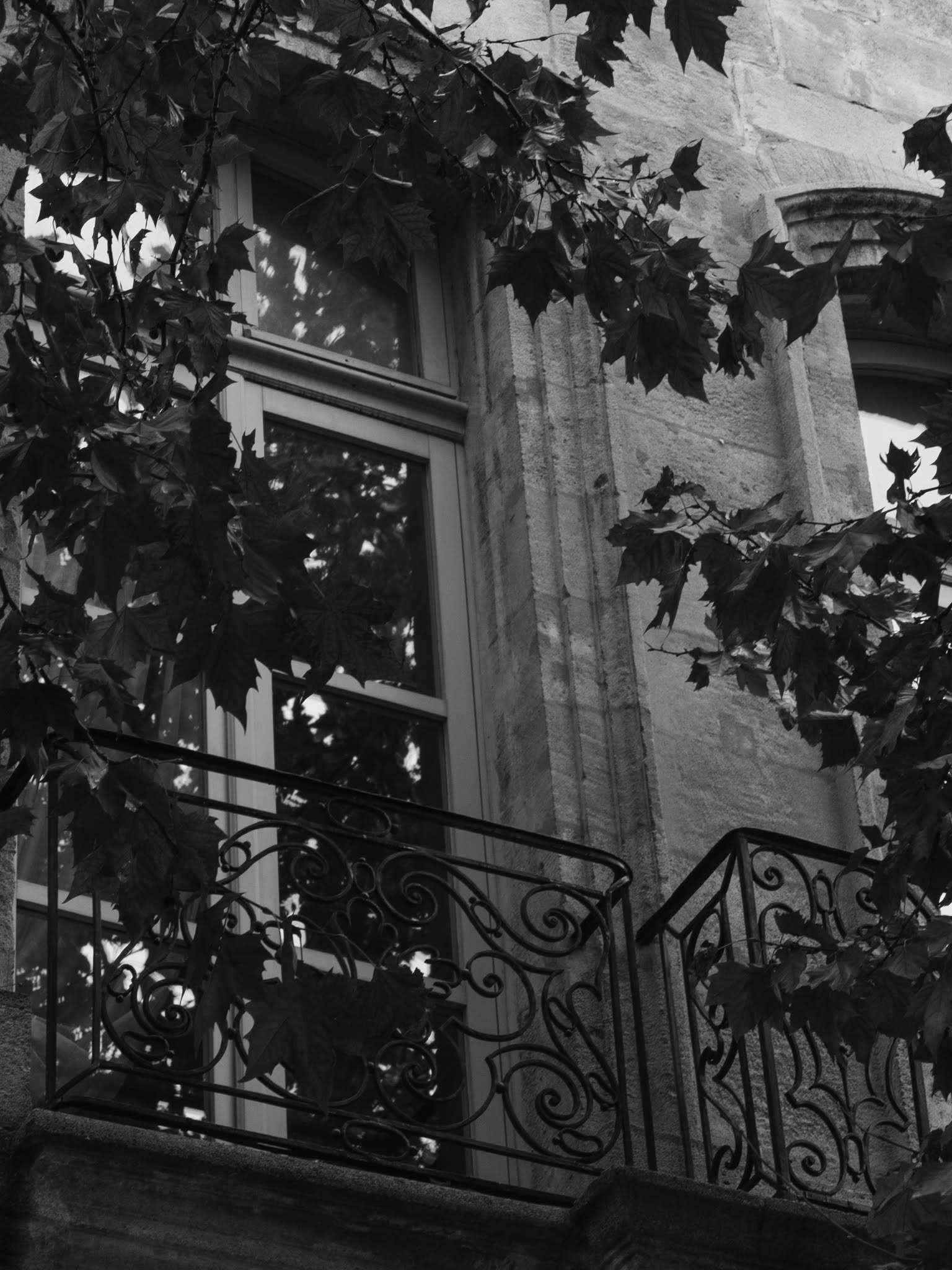 Black and white sycamore tree branches in front of a tall window in Aix-en-Provence.