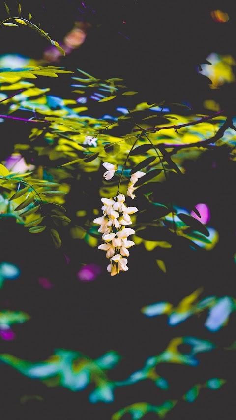 Nhánh hoa rừng
