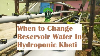 When to Change Reservoir Water In Hydroponic Kheti | Hydroponic Kheti | Hydroponic Farming