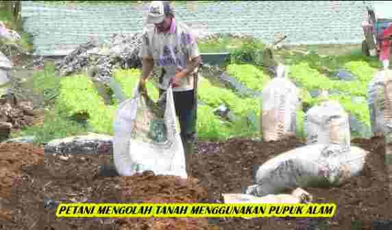 Petani Mengolah Tanah