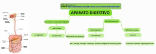 https://www.goconqr.com/en/p/249160-aparato-digestivo-mind_maps