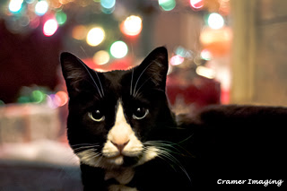 Cramer Imaging's professional quality fine art photograph of a cat sitting in front of a lit Christmas tree in Pocatello, Bannock, Idaho
