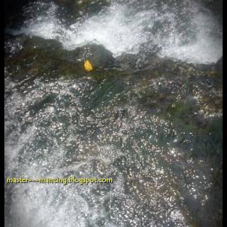 Memancing ikan nilem atau melm babon, di sungai