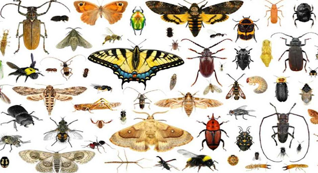 Which insect is responsible for Malaria?