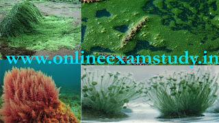 Alge in hindi Biology notes