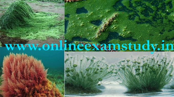 शैवाल {Algae} :  प्रजनन, जीवन, संरचना  Biology notes