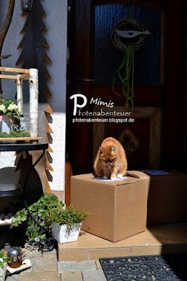 Katze Mimi schnuppert an einem Paket