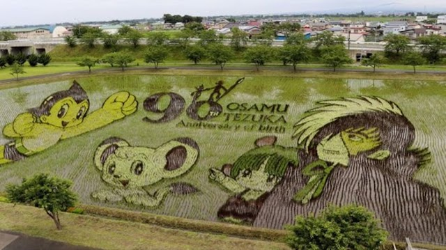 The art of excellent growing rice of the Japanese