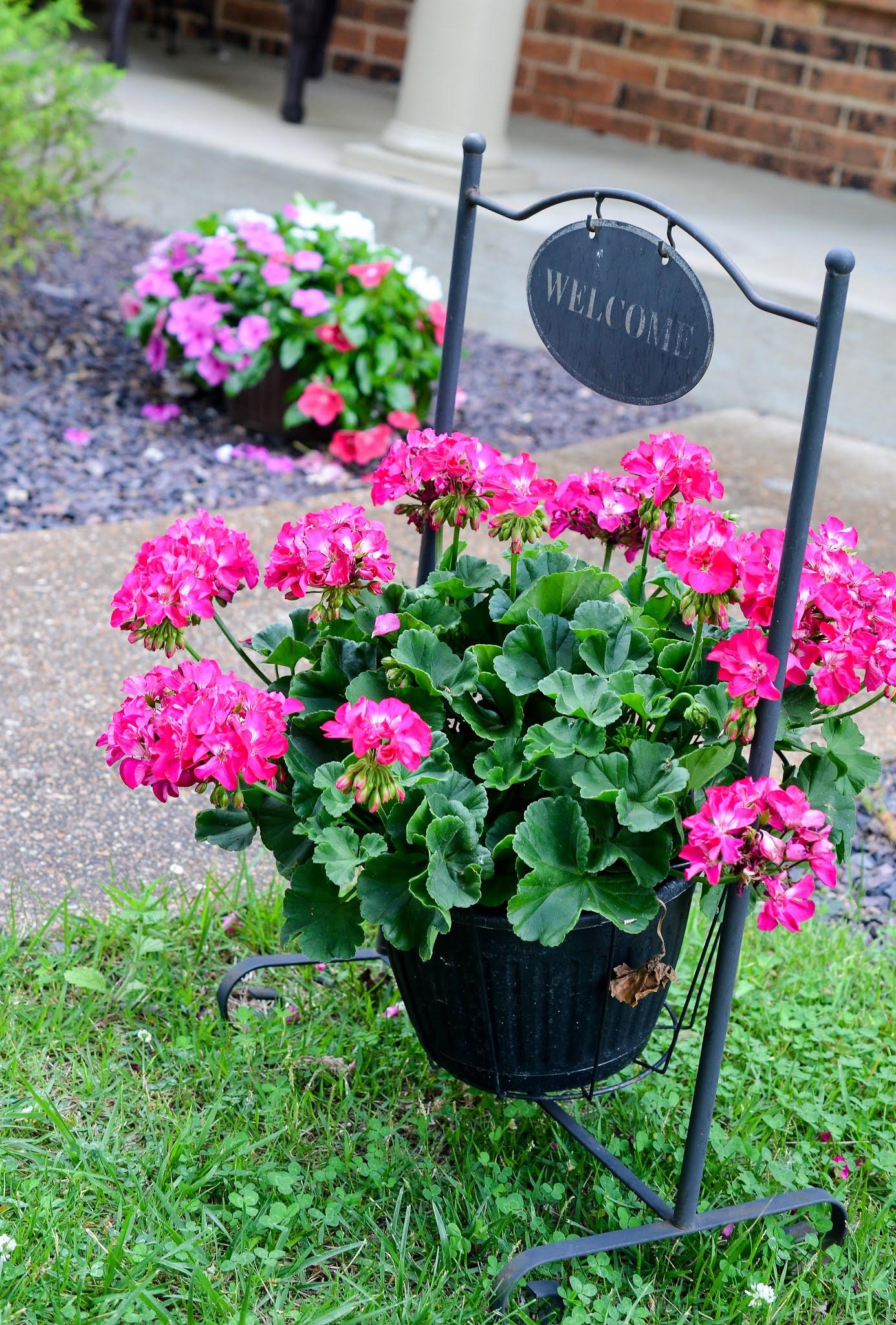 geranium annuals full sun