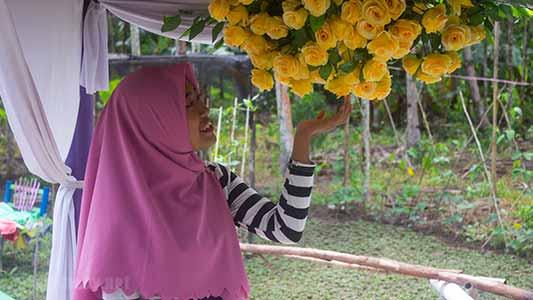Wisata balek kampong desa kalimas pal 5 kubu raya