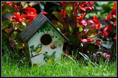 Budka dla ptaszków / Birdbox