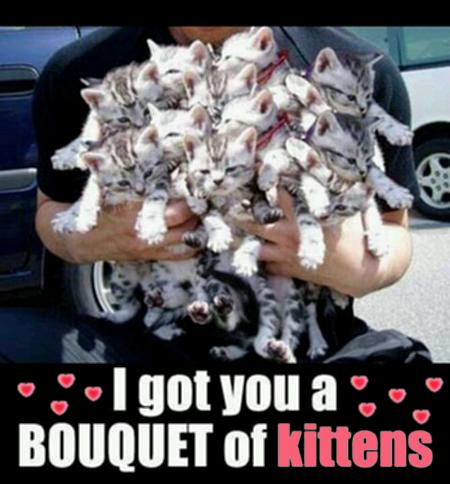 I got you a BOUQUET of kittens