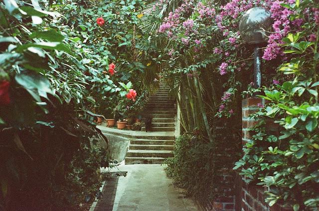 Lamma Island garden