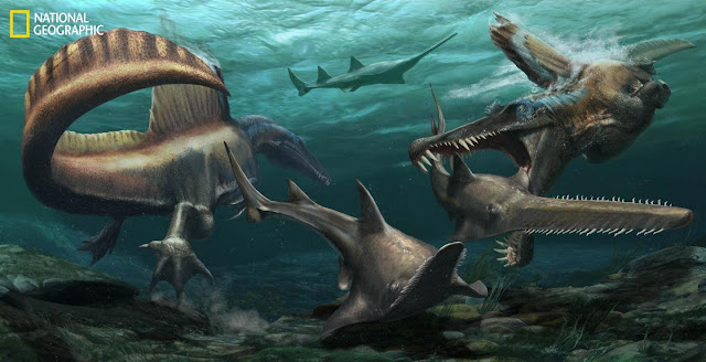 New fossils rewrite the story of dinosaur - and change the appearance of Spinosaurus