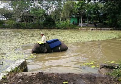 Gajah mandi di way kambas