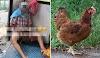 'Dasar atok nafsu binatang!' - Viral pula video lelaki tua 'ratah' ayam betina