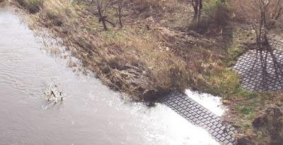 河川敷に水があふれている