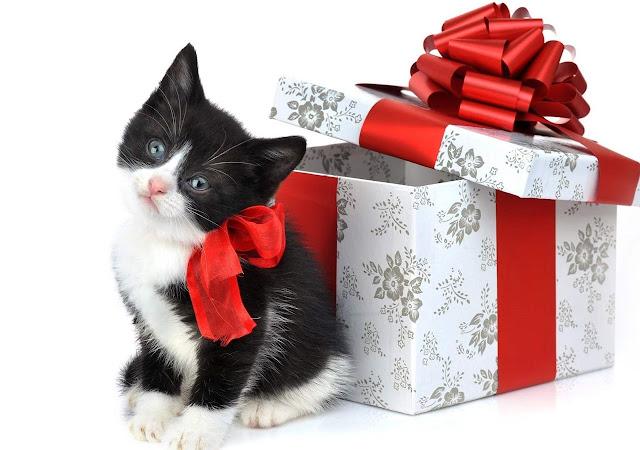 Kitty Christmas Kittens Wallpaper free Download HD