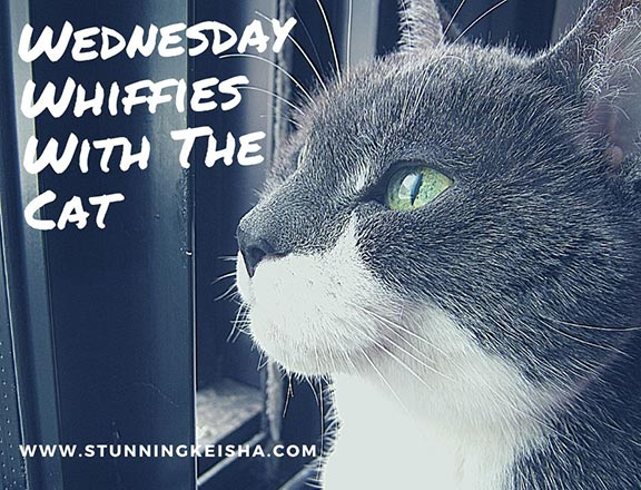 Wednesday Whiffies With The Cat