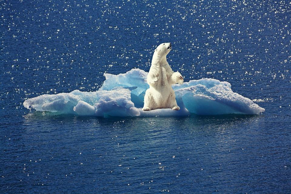 Renaissance, un roman pour informer et lutter contre le réchauffement climatique
