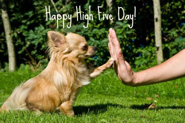 National High Five Day Wishes Images