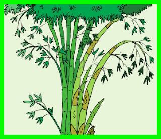 rangkuman materi k13 kelas 6 tema 2 ciri khusus pohon bambu