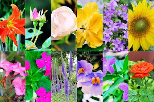 Wallpapers de flores y rosas para iPhone y iPod Touch