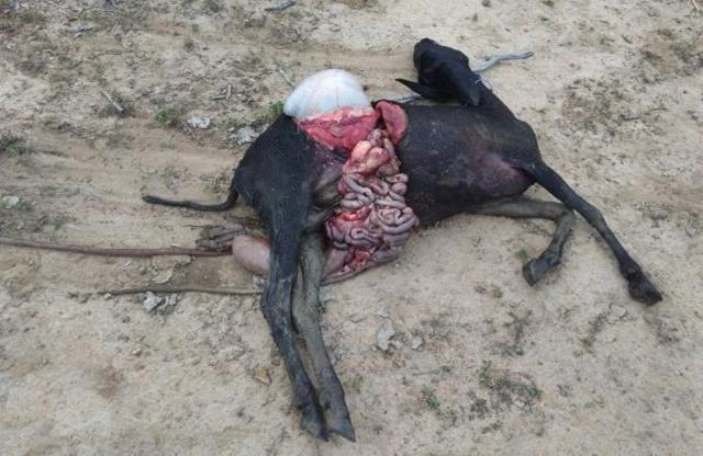 violência imposta por cães contra esses animais.