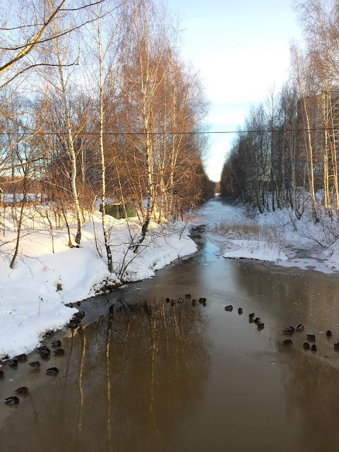 Весна, Утки на речке