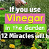 Discover How You Can Use Vinegar in Your Garden