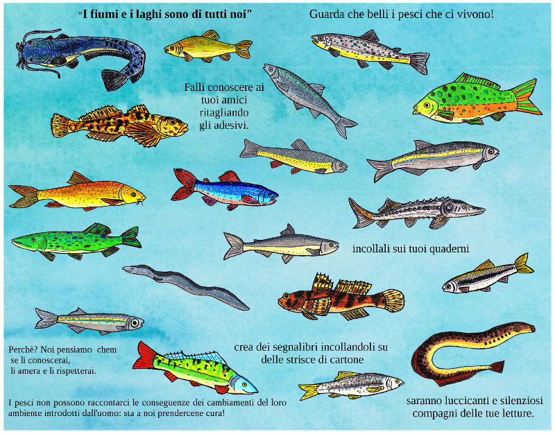 Immagini di pesci da stampare for Disegni di pesci da colorare e stampare gratis