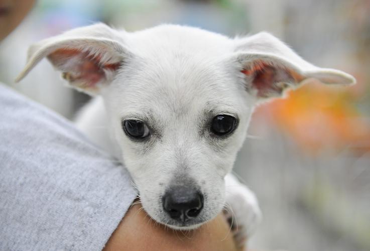 Jennifer Leigh Photography Faces At Glynn County Animal Services Brunswick Ga Animal Shelter