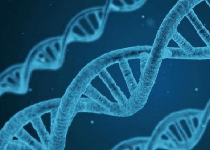DNA al-quran dan bible