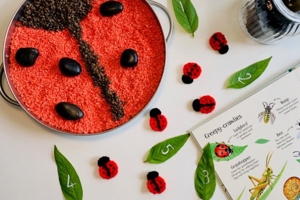 Using the curiosity approach at home  - ladybird tray play counting activity