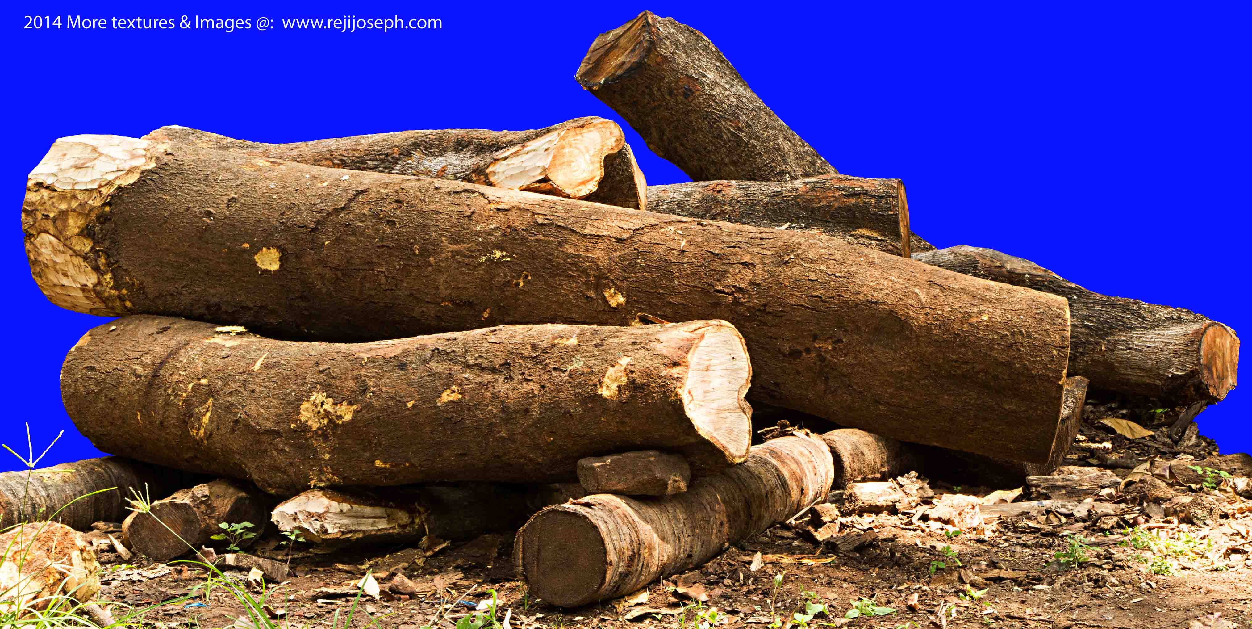 Wood Tree Trunk texture 00007