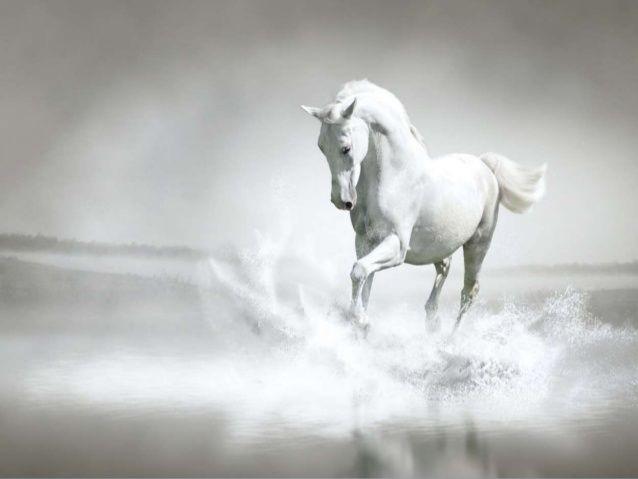 kali i bardhë