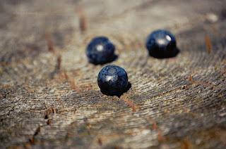 Mazurskie jagody