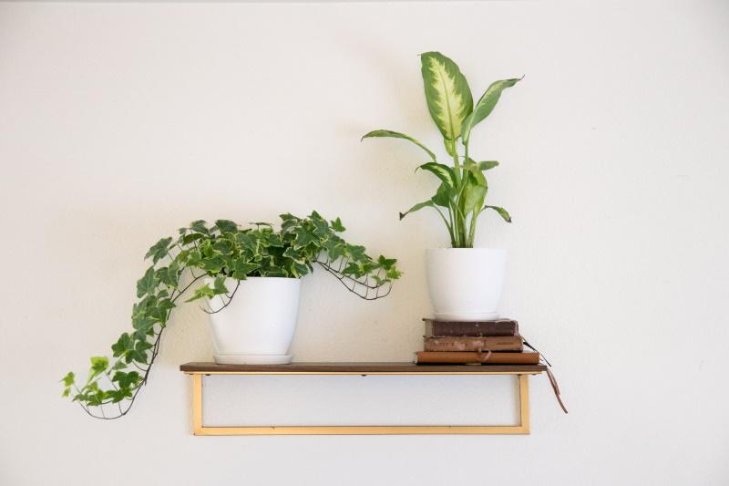 Photographie de plante d'intérieur