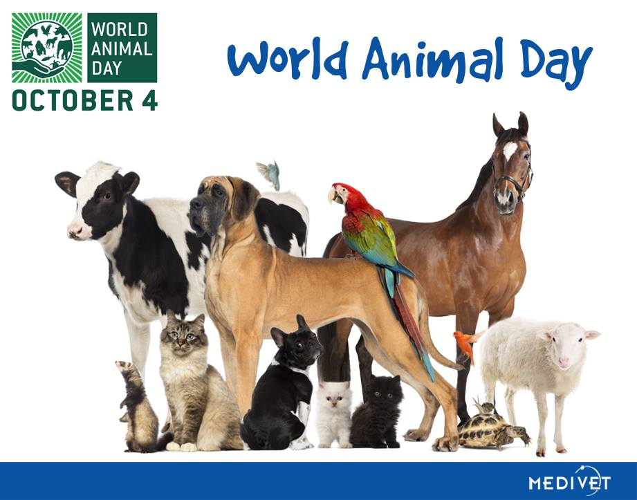 World Animal Day Wishes Photos