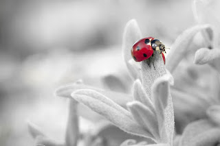 A red and black ladybug on a white leaf. Photo by Filip Kruchlik on Pixabay.